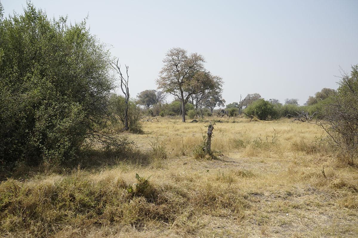 005-botswana-okavango-paolo-cardinali