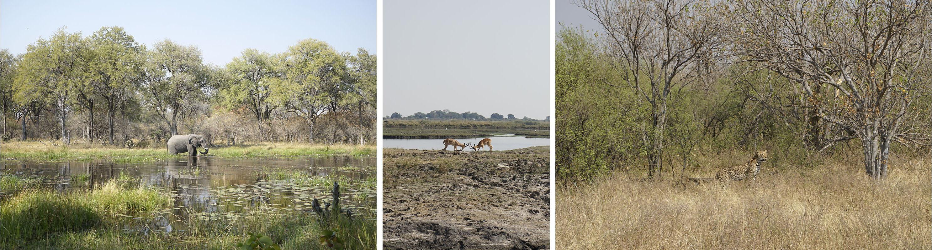 012-botswana-okavango-paolo-cardinali