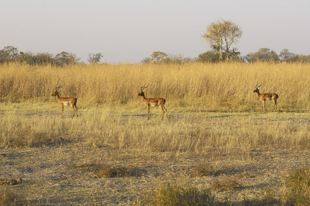 019-botswana-okavango-paolo-cardinali