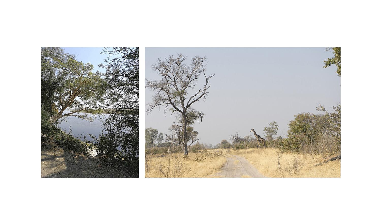 022-botswana-okavango-paolo-cardinali