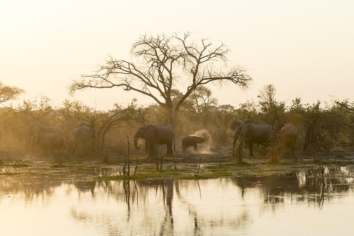 023-botswana-okavango-paolo-cardinali